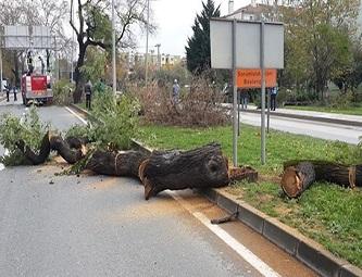 Yalova'da büyük çoğunluğu çınar olan 158 ağaç kesildi.