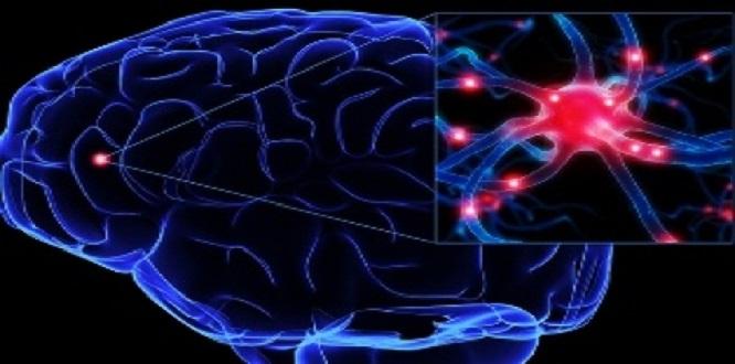 Yale Üniversitesi'ndeki deneyde domuzların beyinleri Ölümden sonra beyni canlandırıldı