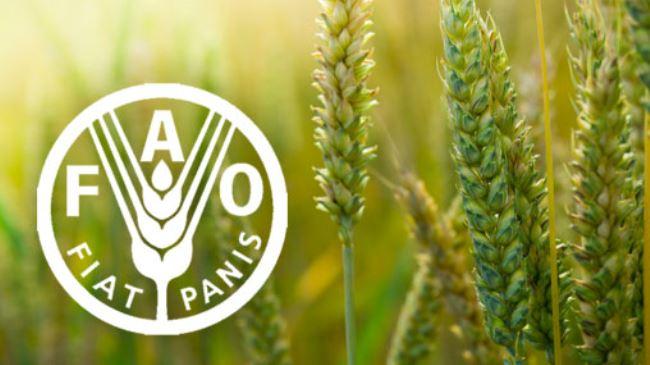 BM'ye bağlı Gıda ve Tarım Örgütü (FAO): Gıda fiyatları dünyada yüzde 3.6 düştü, Türkiye'de yüzde 29.77 arttı