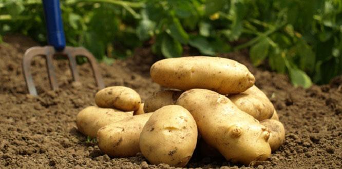 Zam şampiyonu olan patatesin fiyatı cep yakmaya başladı !