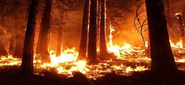 Bursa'da 9 ayrı noktada çıkan orman yangını yayılıyor