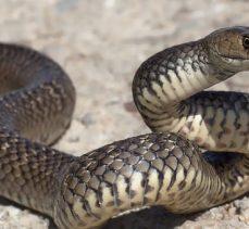 Fabrikaya giren 2 metre boyundaki yılan paniğe sebep oldu