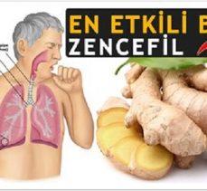 Zencefilin sağlığa faydaları