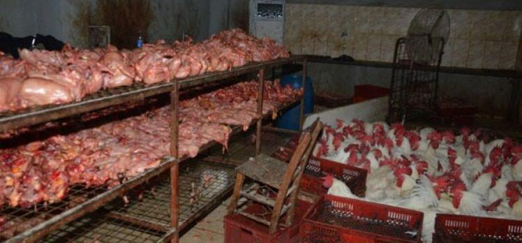 Tavuk kesimhanesinde rezalet görüntüler
