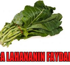 En sağlıklı gıdalar listesinde ilk sıralarda yer alan kara lahananın faydaları