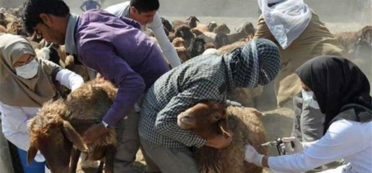 İran, Hayvan aşılarının yüzde 95'inin ülke içinde üretildiğini açıkladı