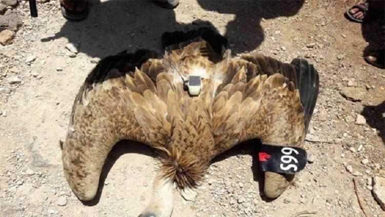 İşgalci israilin casus kuşu yakalandı