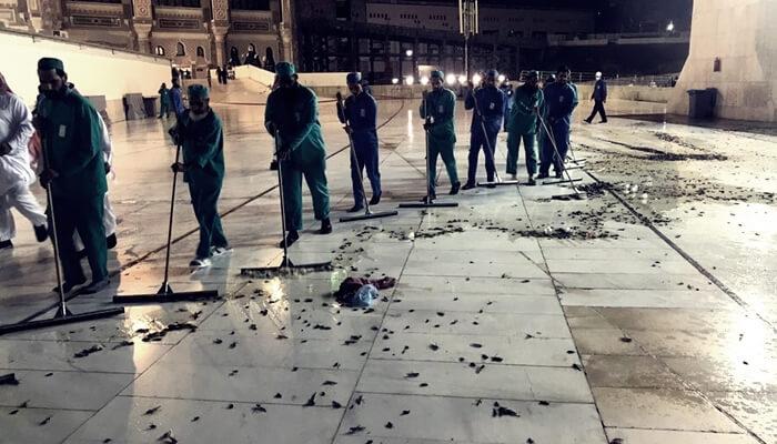 Mekke'yi hamam böcekleri ve çekirgeler bastı